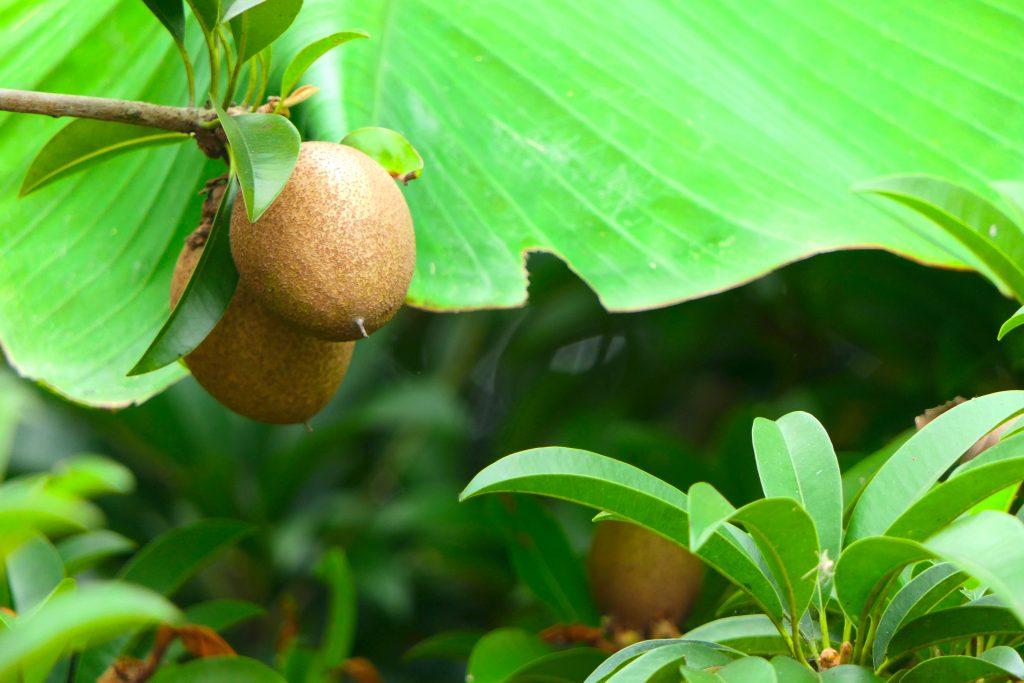 ผลไม้ที่คนเป็นเบาหวานไม่ความรับประทาน